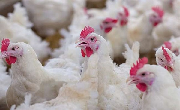 NepalE28099s-Ministry-of-Agriculture-and-Livestock-Development-has-directed-all-its-offices-to-halt-the-import-of-poultry-items-from-India.jpg